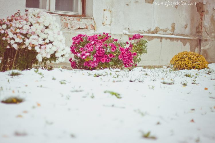 Nasmej_se_Pticica_OPD_93